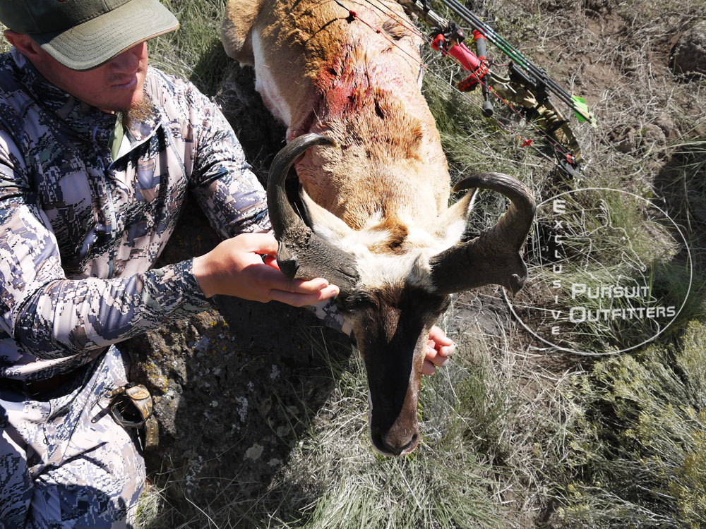 Cody Conklin 2013 Arizona Archery Pronghorn Antelope