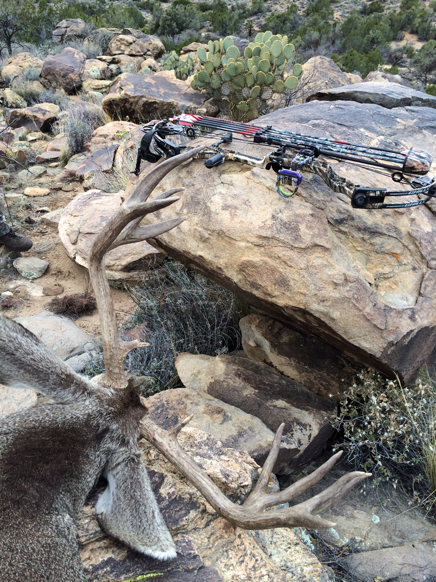 Archery Mule Deer Hunting in Arizona with Exclusive Pursuit Outfitters
