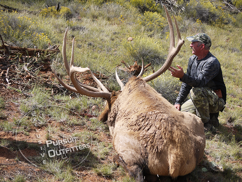 The antler size on this bull matched his body size.