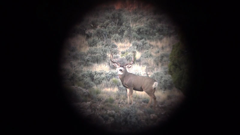 Big Young Typical I found prior to opening day of the Unit 13A opener.
