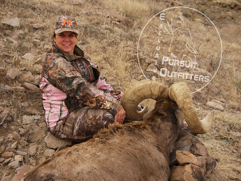 Arizona's Unit 15D continues to be one of the best Desert Bighorn Sheep Hunting Units.